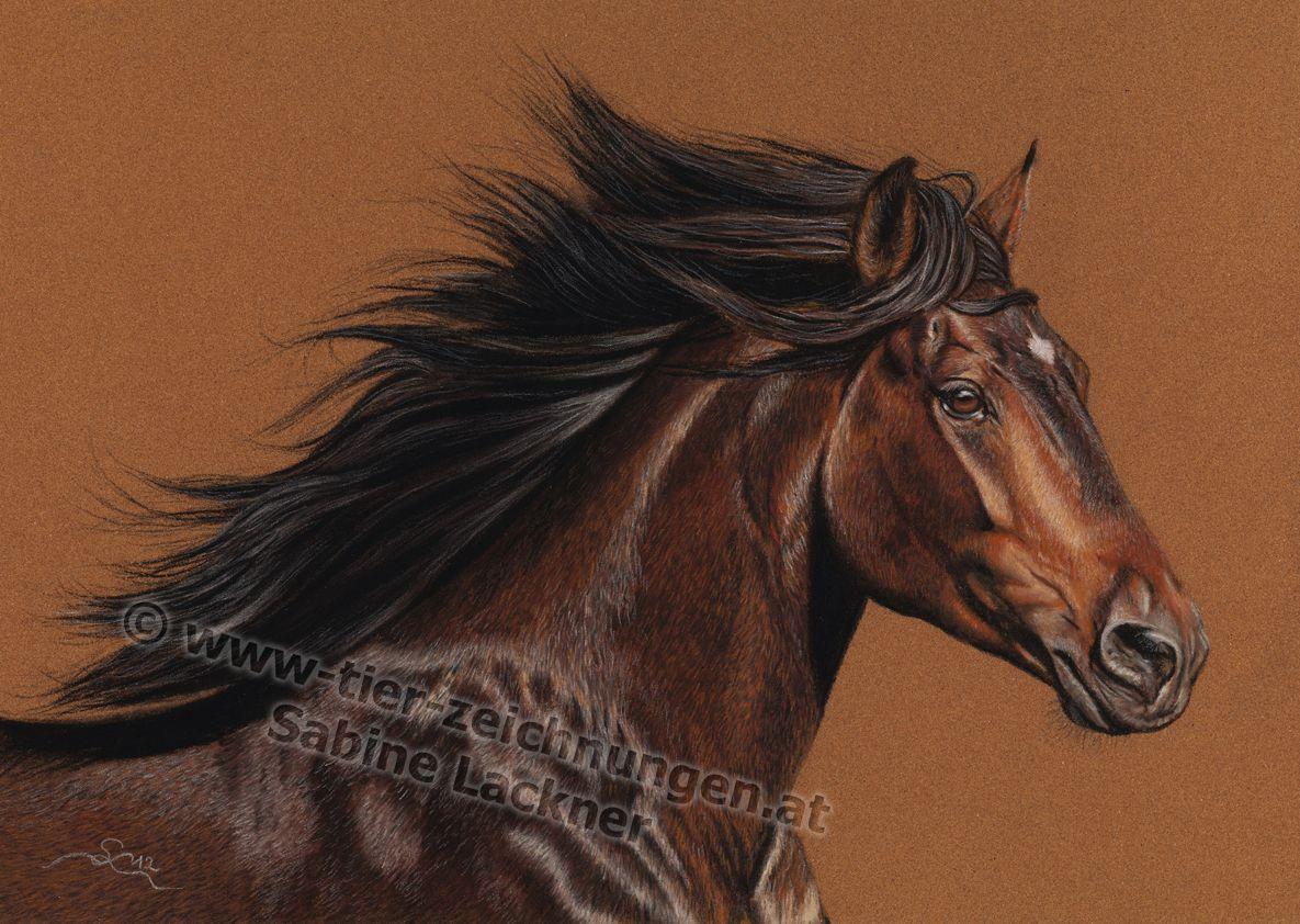 """""""Tornado"""" Pferdezeichnung in Pastellkreide von Sabine Lackner Horseportrait / Horsepainting in pastels by Sabine Lackner Tierzeichnungen / Tierportraits Animalpaintings / Animalportraits"""