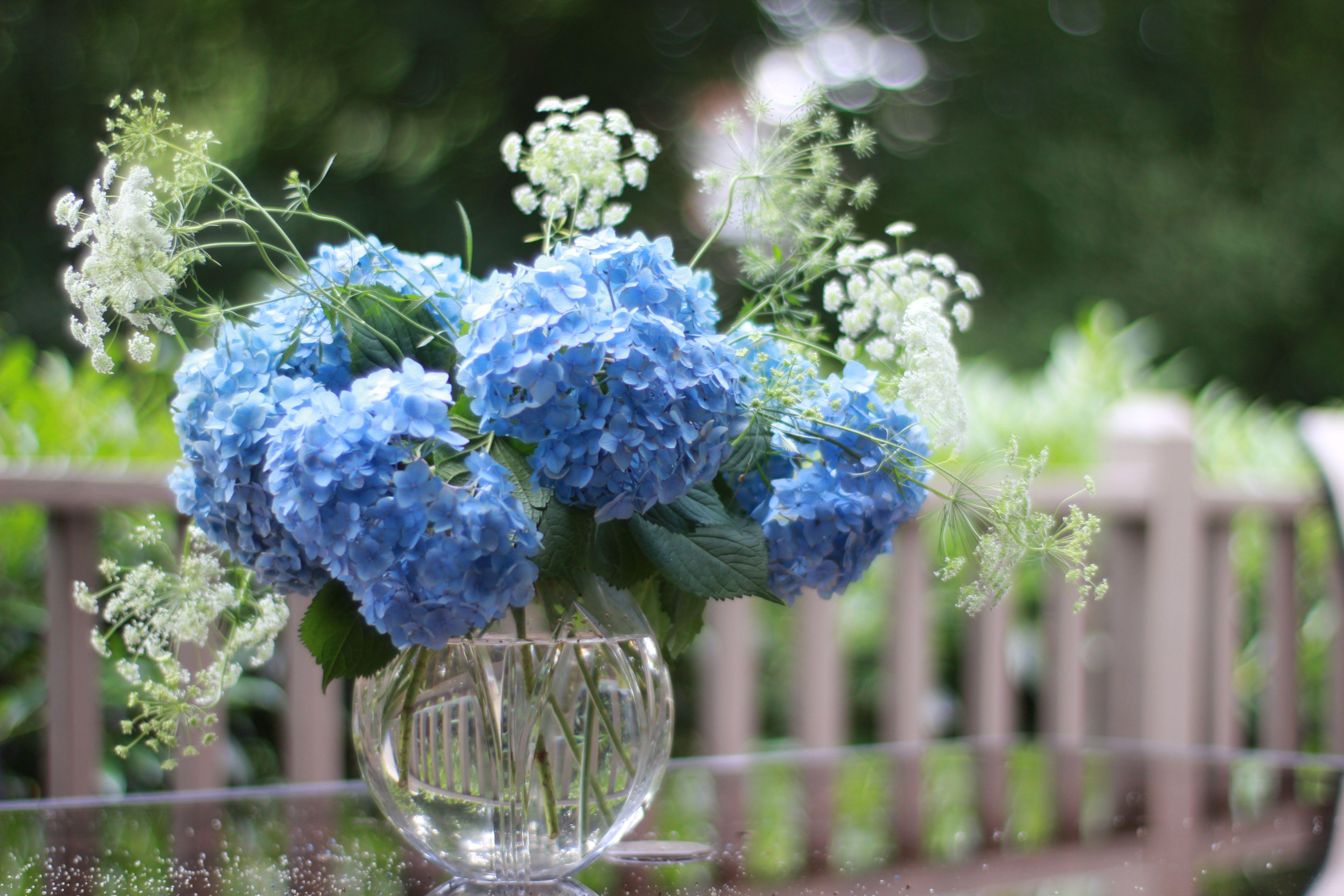 How To Keep Hydrangeas From Wilting Hydrangea Macrophylla Hydrangea Arrangements Hydrangea
