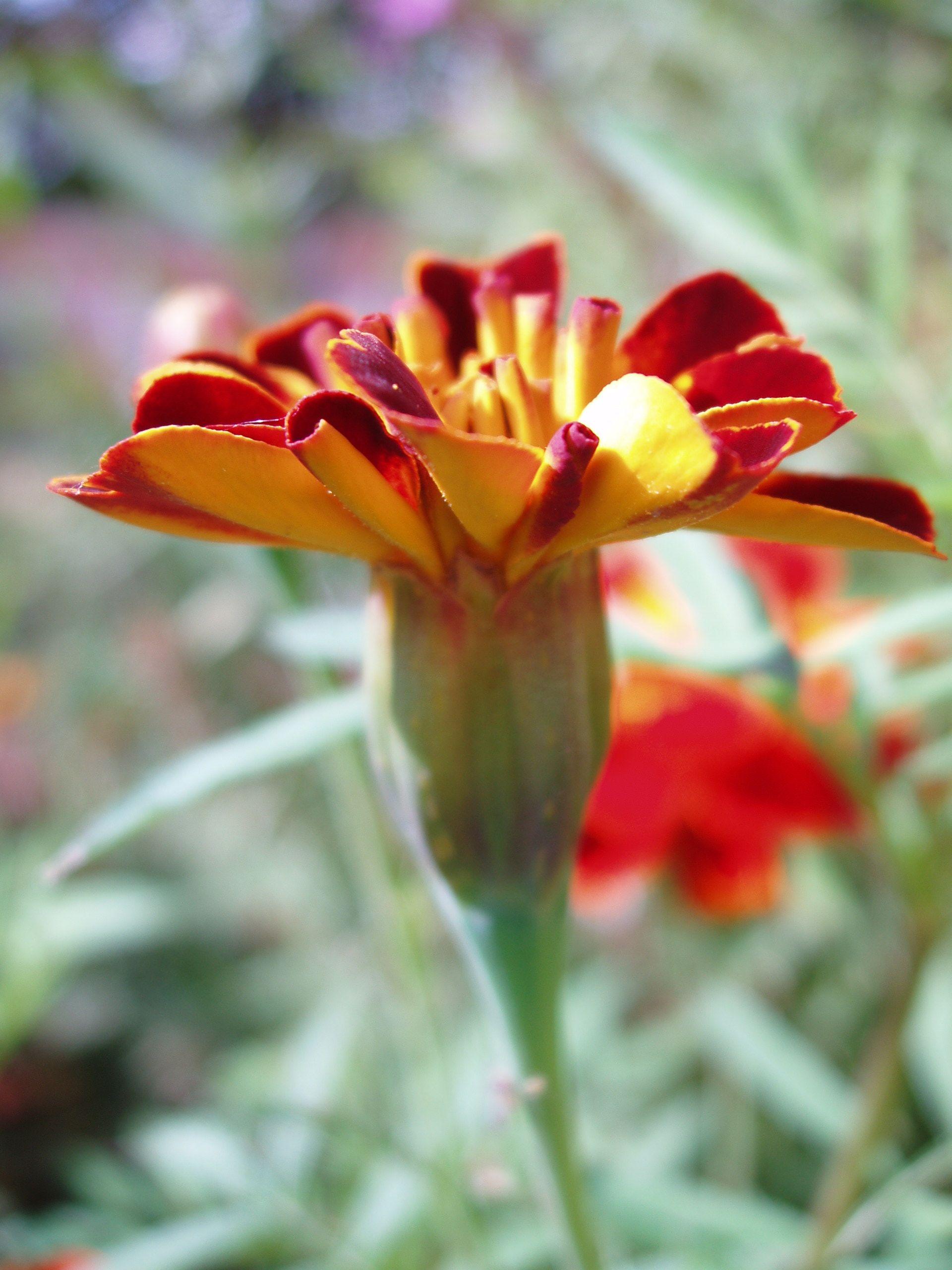 Красивые цветы фото хорошего качества (с изображениями ...