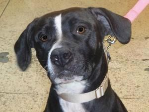 Yoshi 4 Yrs Old Pittsburgh Pa Animal Details With Images