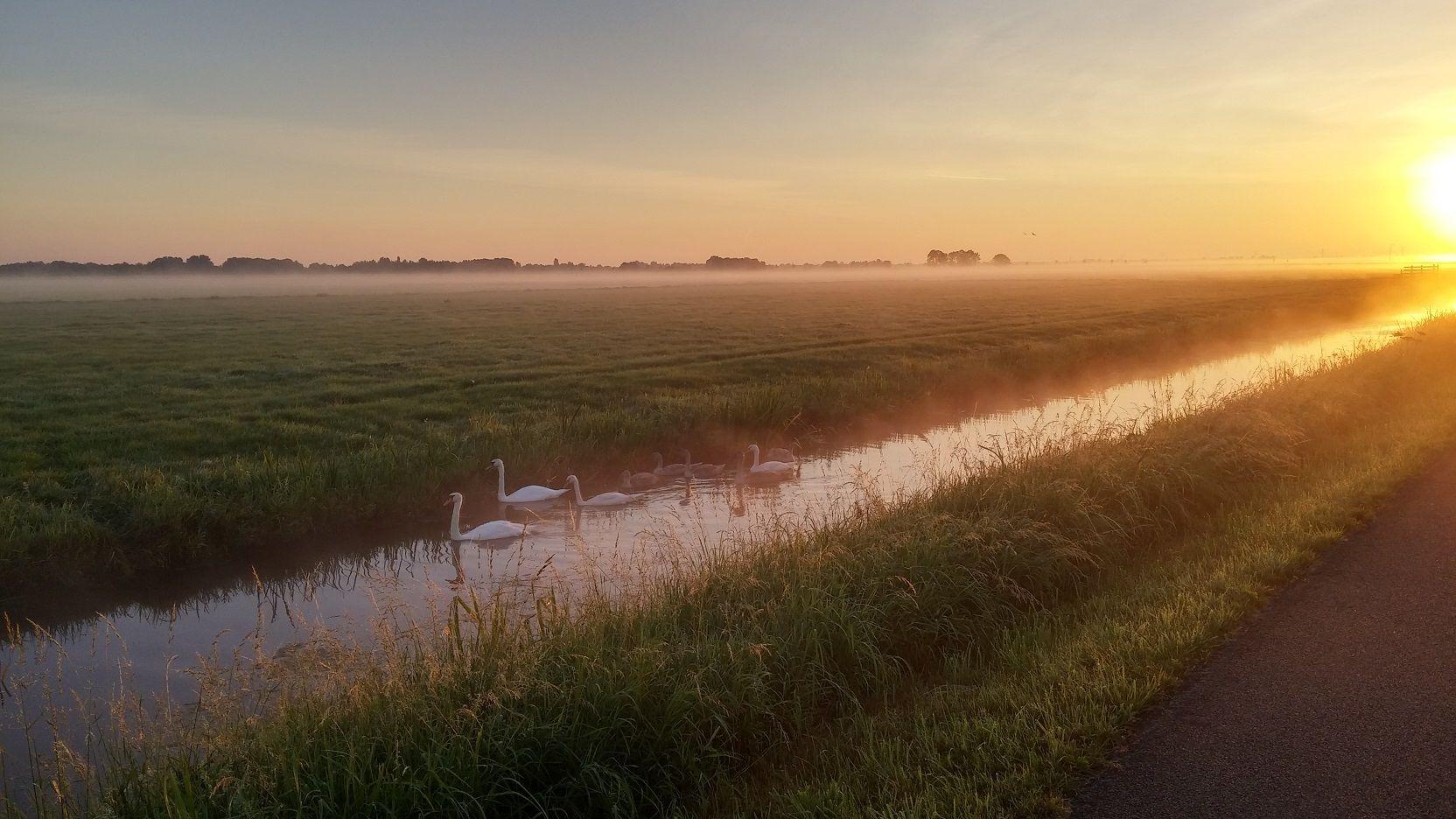 Near Kockengen, The Netherlands (2015)