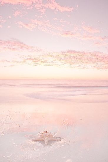 Pink Beach Photo Landscape Photography Starfish On The Shore Dawn Sunset Pink Pastel Cute Wallpapers Wallpaper Photo