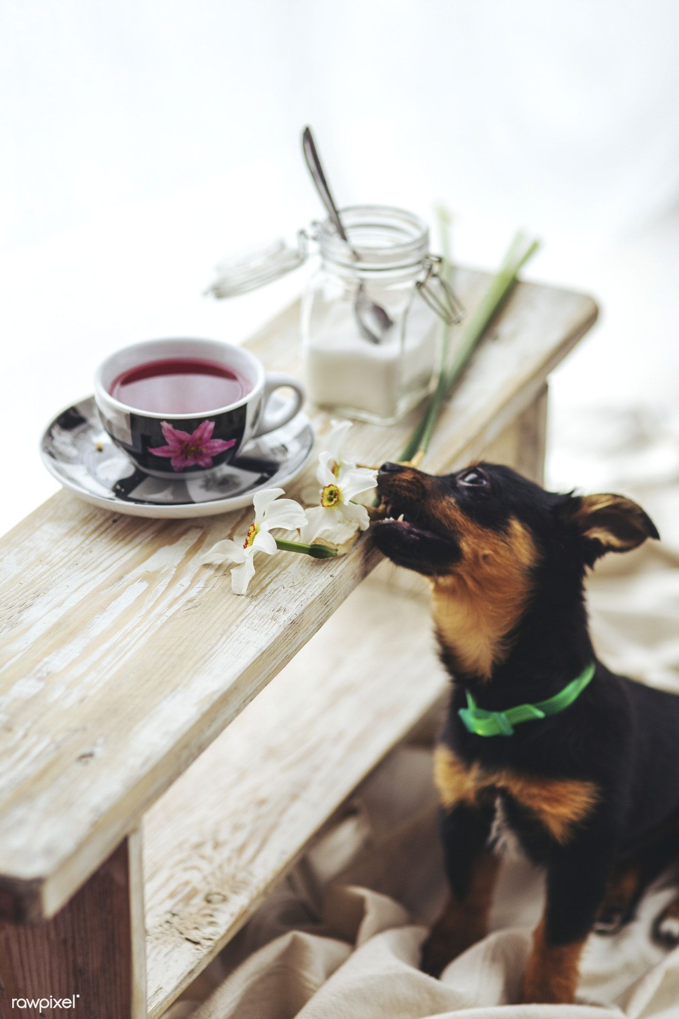 Small black puppy by a table free image by