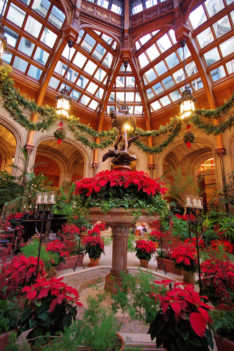 Winter garden inside biltmore house with christmas - Pictures of homes decorated for christmas on the inside ...