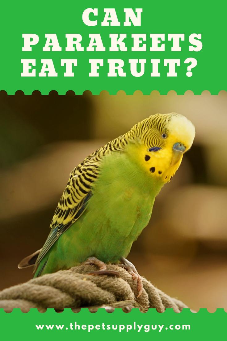 Can Parakeets Eat Fruit Complete List Of Fruits The Pet Supply Guy Parakeet Food Parakeet Parakeet Care