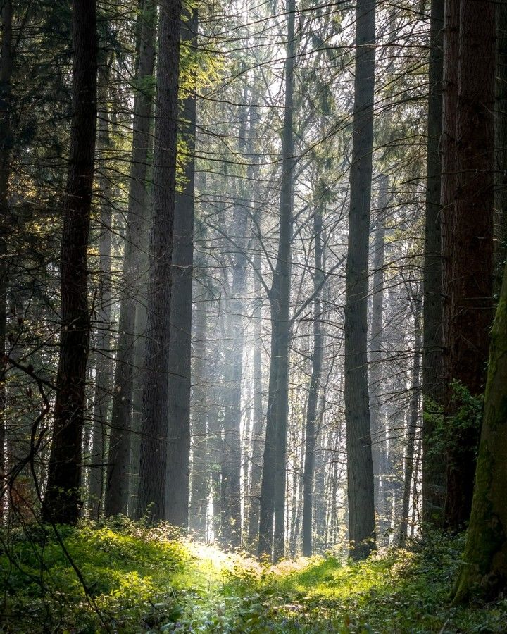 [New] The 10 Best Photography (with Pictures) -  Hiking in the forest at sunrise. #forest #naturephotography #naturelovers #nature_lovers #forest #forest_masters #forestlovers #outdoorslover #forestlife #naturephotograph #naturephoto #canonphotography #belgium #belgique #landscapersofinstagram #forestlovers #forêtdesoignes #hikingculture #hikingtrail #outdoorphotography #outdoorlovers #landscape_hunter #natureinside #landscapephotomag #natureseekers #landscape_capture #landscape_lover #landscape