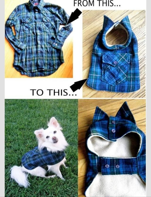 DIY doggy coat! :D