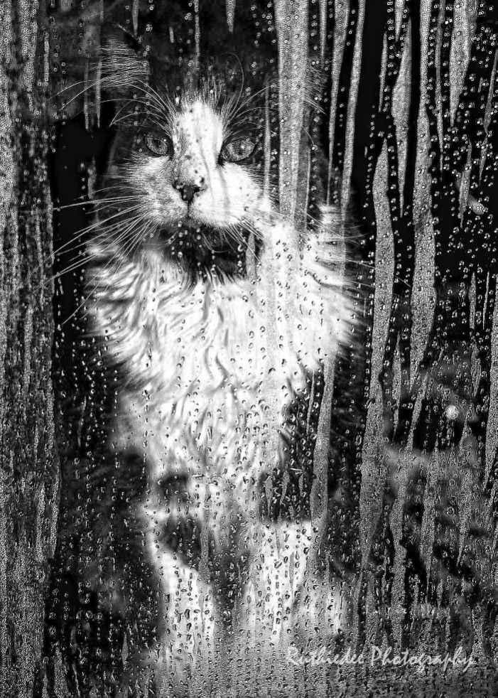 toby by ruthiedee photography ° cats sweet  cat in the rain essay toby by ruthiedee photography