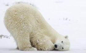 A Polar Bear's Tale: 'The White Bear' fairy tale