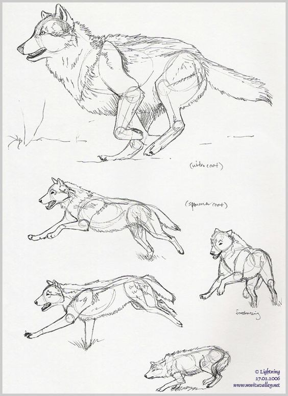 Wolves! Wolf! I love wolves! | Drawing | Pinterest | Dibujo, Lobos y ...
