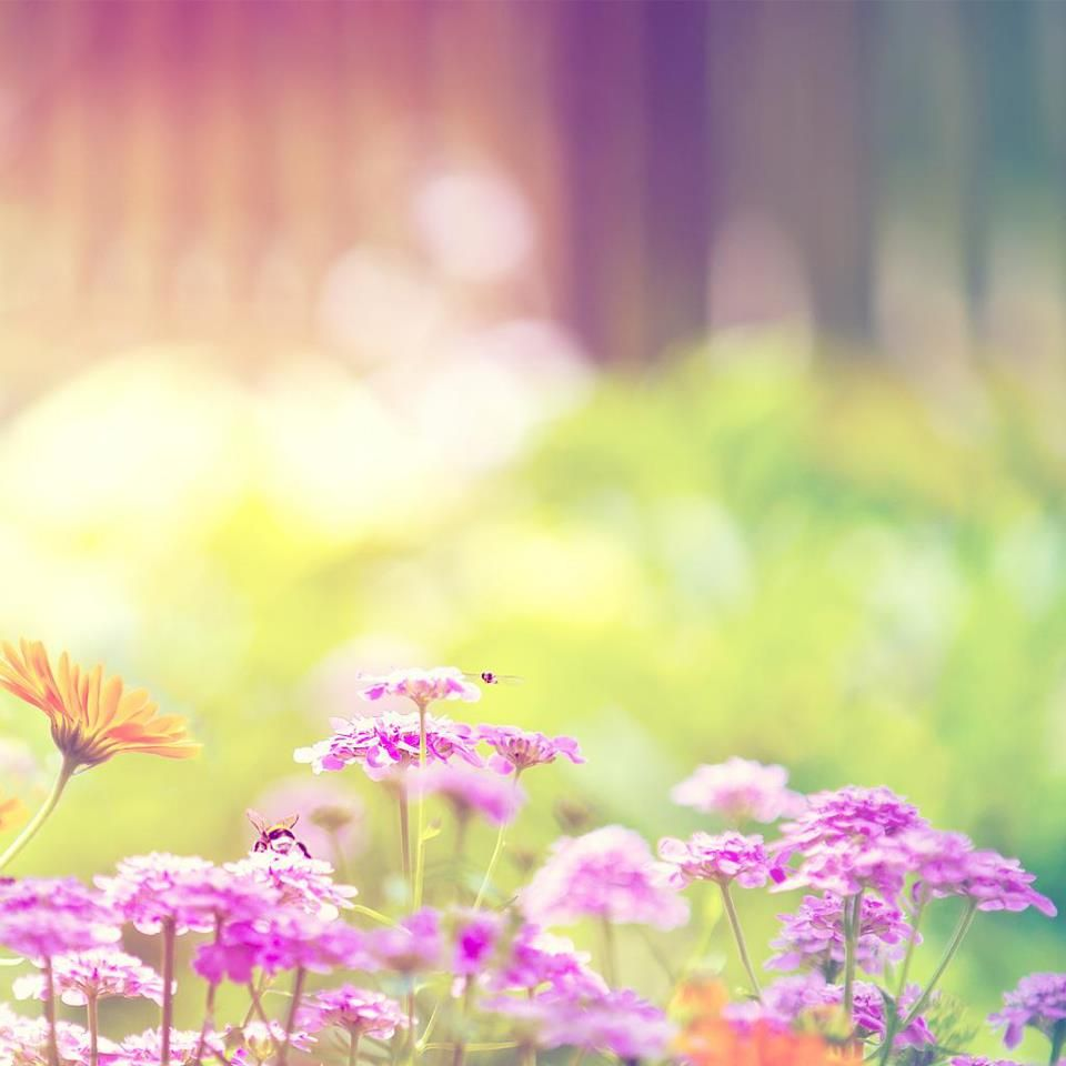 Pretty Spring Flowers Wallpaper Purple Flowers Wallpaper Spring Wallpaper Hd