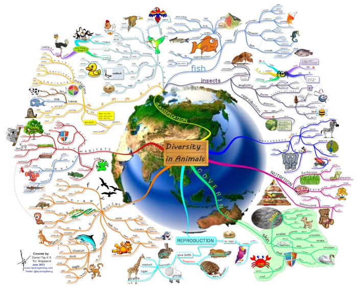 diversity in animals free mind map biggerplate mind