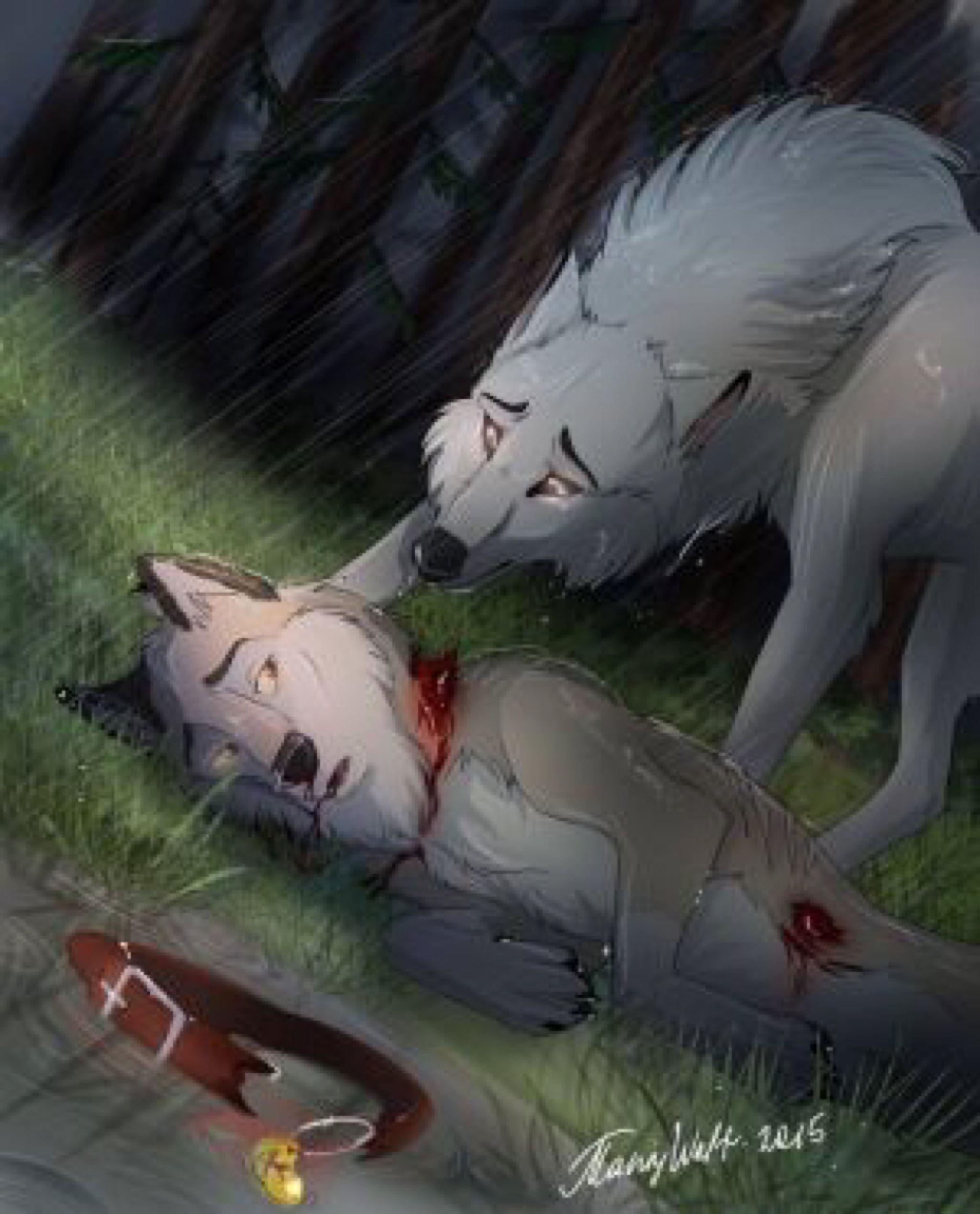 очень картинки умирающих волков заключения принято помещать