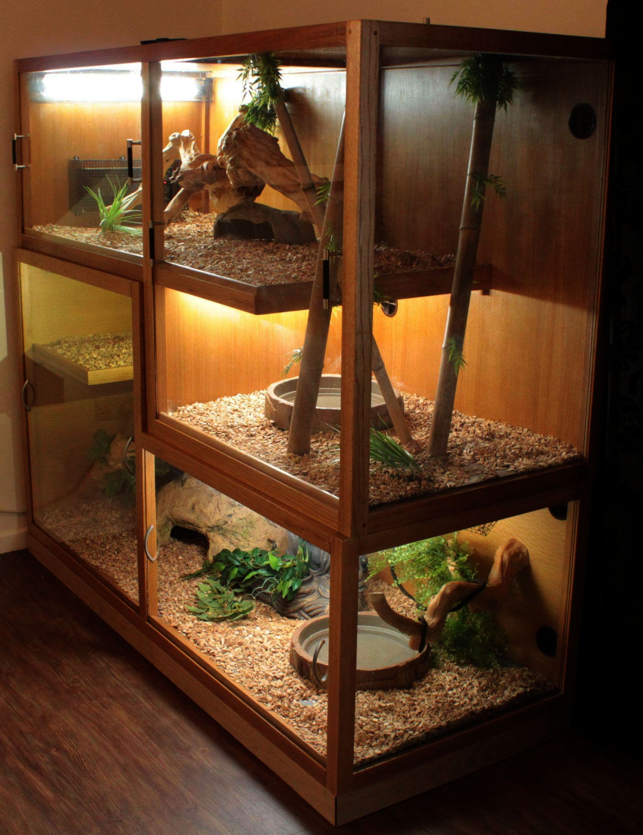 Pin By Amy Mitchell On Reptiles In 2020 Bearded Dragon Habitat