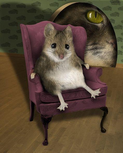 It S Been A Hard Days Night Cute Animals Felt Animals Pet Mice