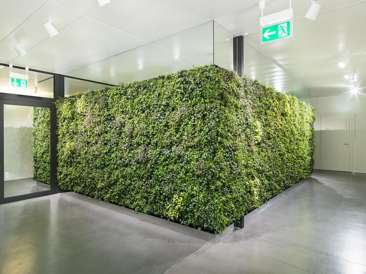 Elegant Verticalis BIG   4 Green Walls Automatically Watered