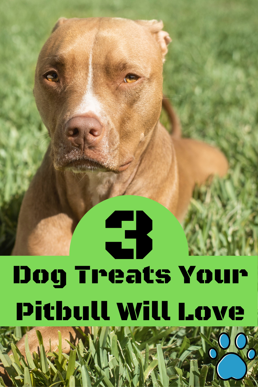 3 Dog Treats Your Pitbull Will Beg For Smarter Pup Training Pitbulls Dog Mom Humor Training Your Puppy