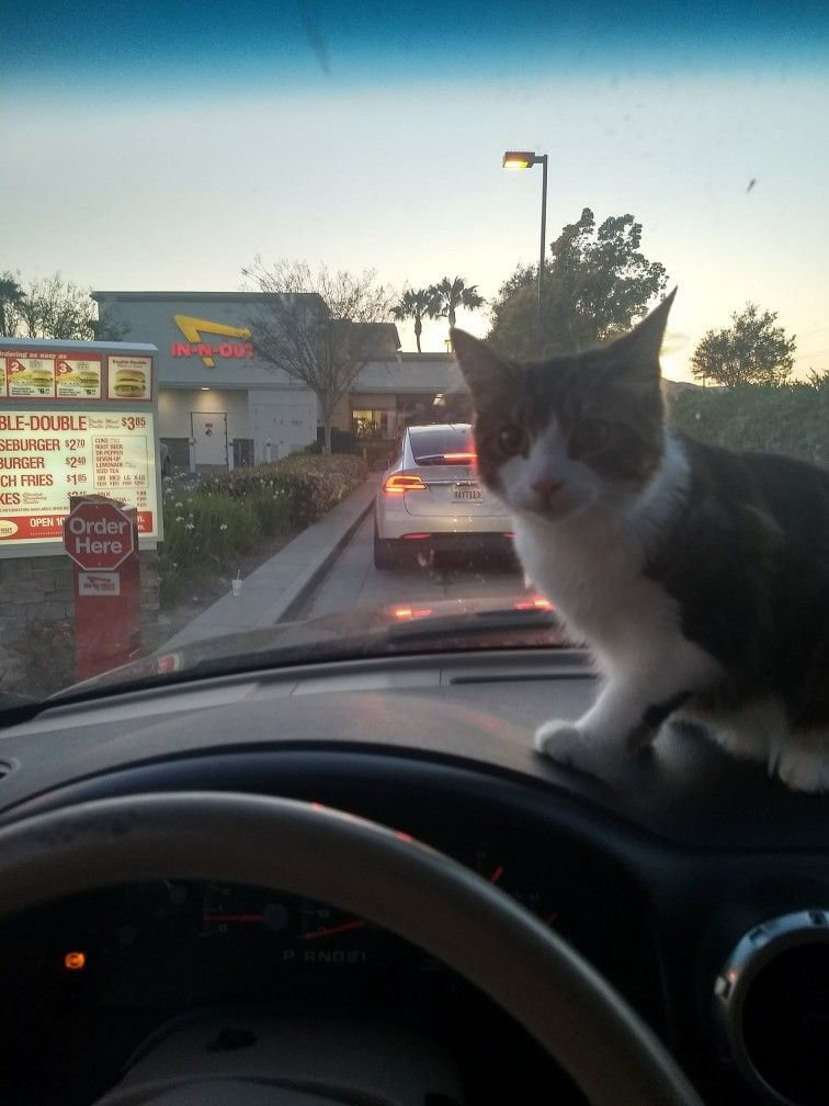 Even The Cats Go To In N Out Kittens Cats Crazy Cats