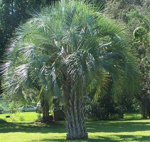 Pin On Tony S Tree Plantation