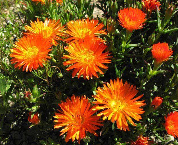 уход и содержание домашних растений