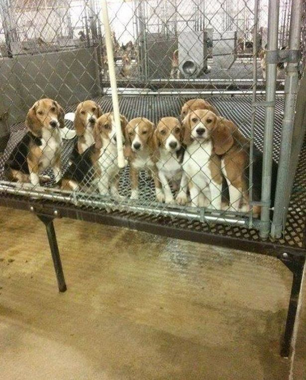 Watch Moment 38 Beagles Used In Animal Testing See Grass For The