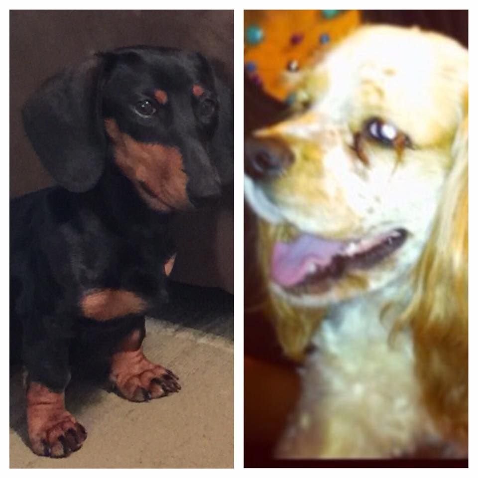 Shaquana Woolfolk's Pups, Zoe & Kelz.