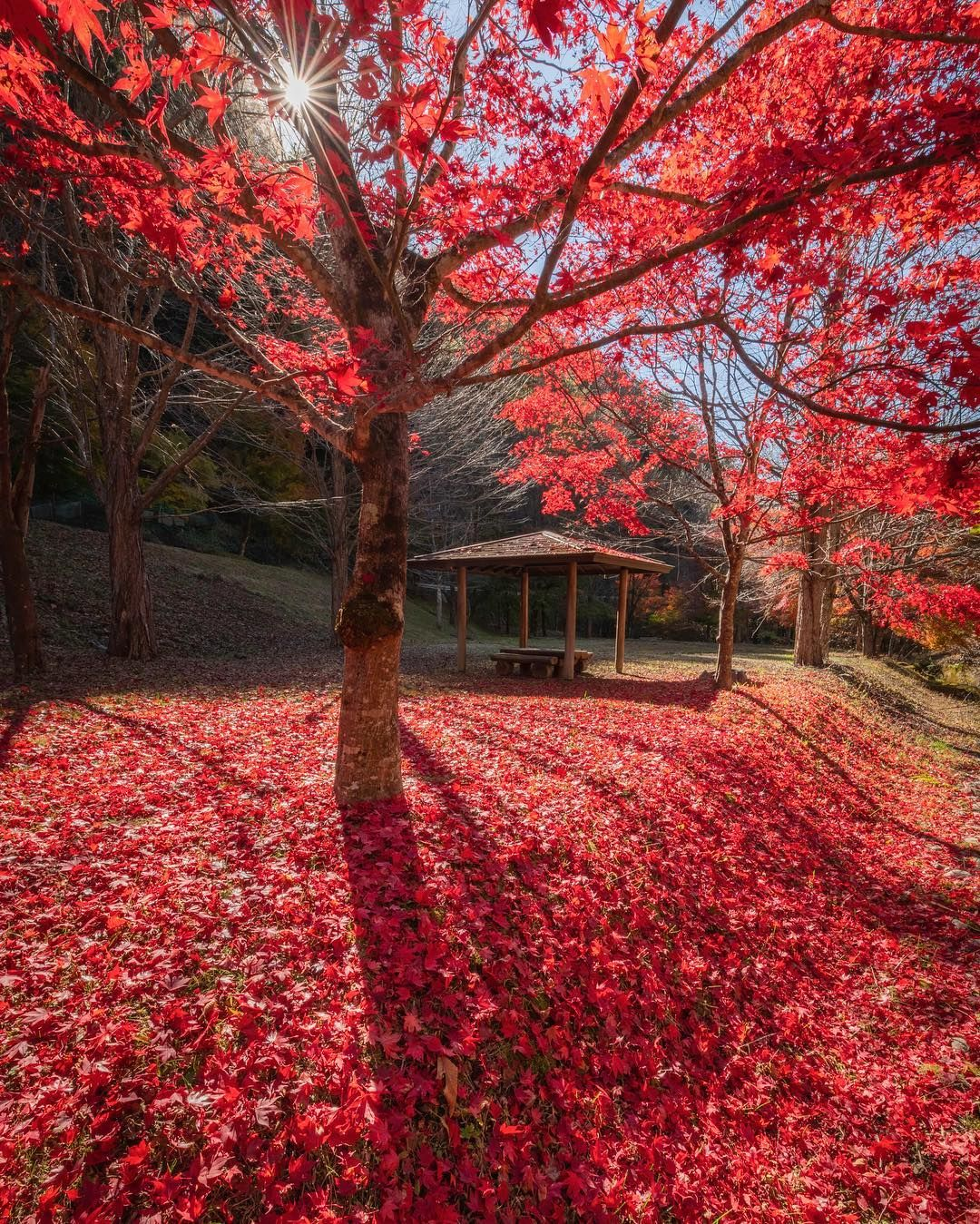 Colorful Autumn In Japan Landscape Photography By Daisuke Uematsu Landscape Photography Autumn Landscape Landscape Photography Tutorial
