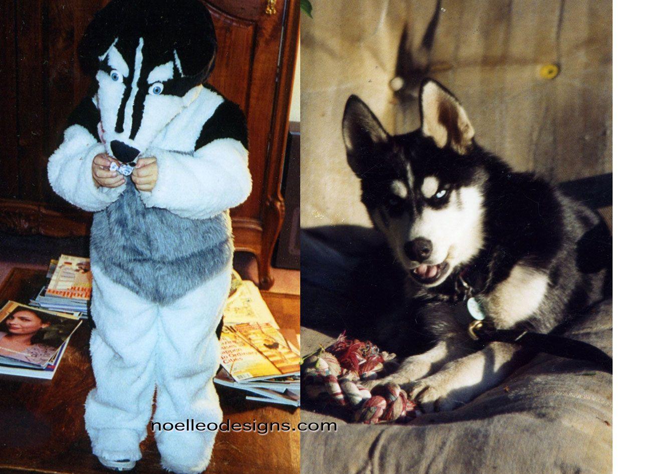 Siberian Husky Dog Costume And The Inspiration Little Husky
