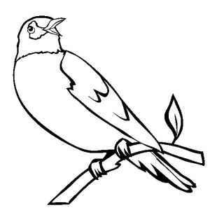 Wisconsin Robin Coloring Page Kids Play Color Bird Coloring