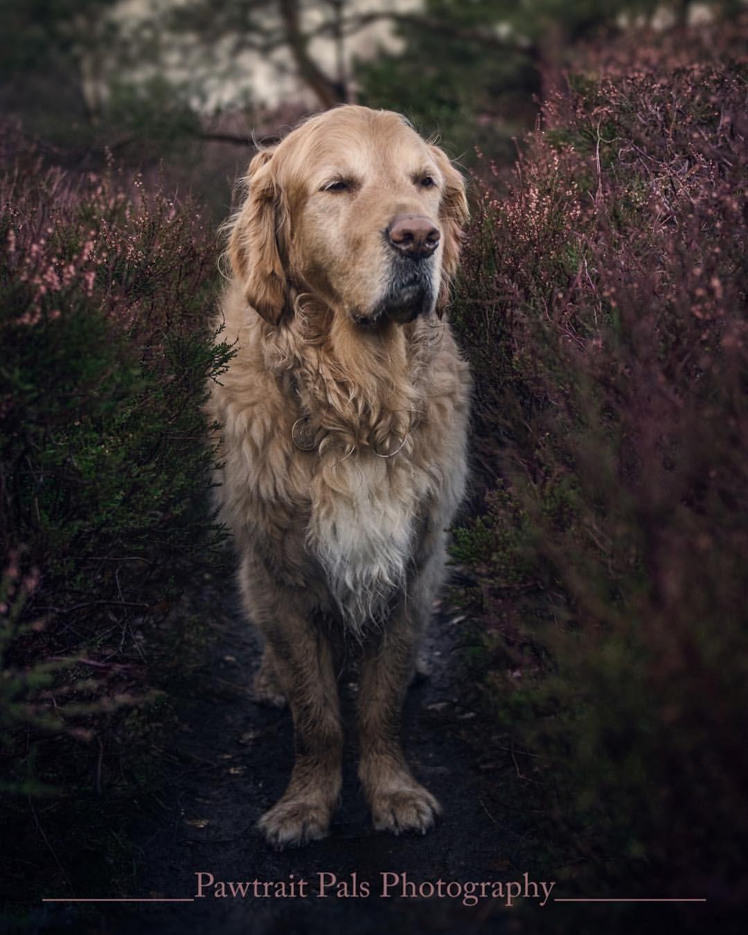 21 Likes 0 Comments Pawtrait Pals Pet Photography Pawtraitpals On Instagram Sundays Mean Me And My Dogs Ge Animal Photography Me And My Dog Outdoor Dog