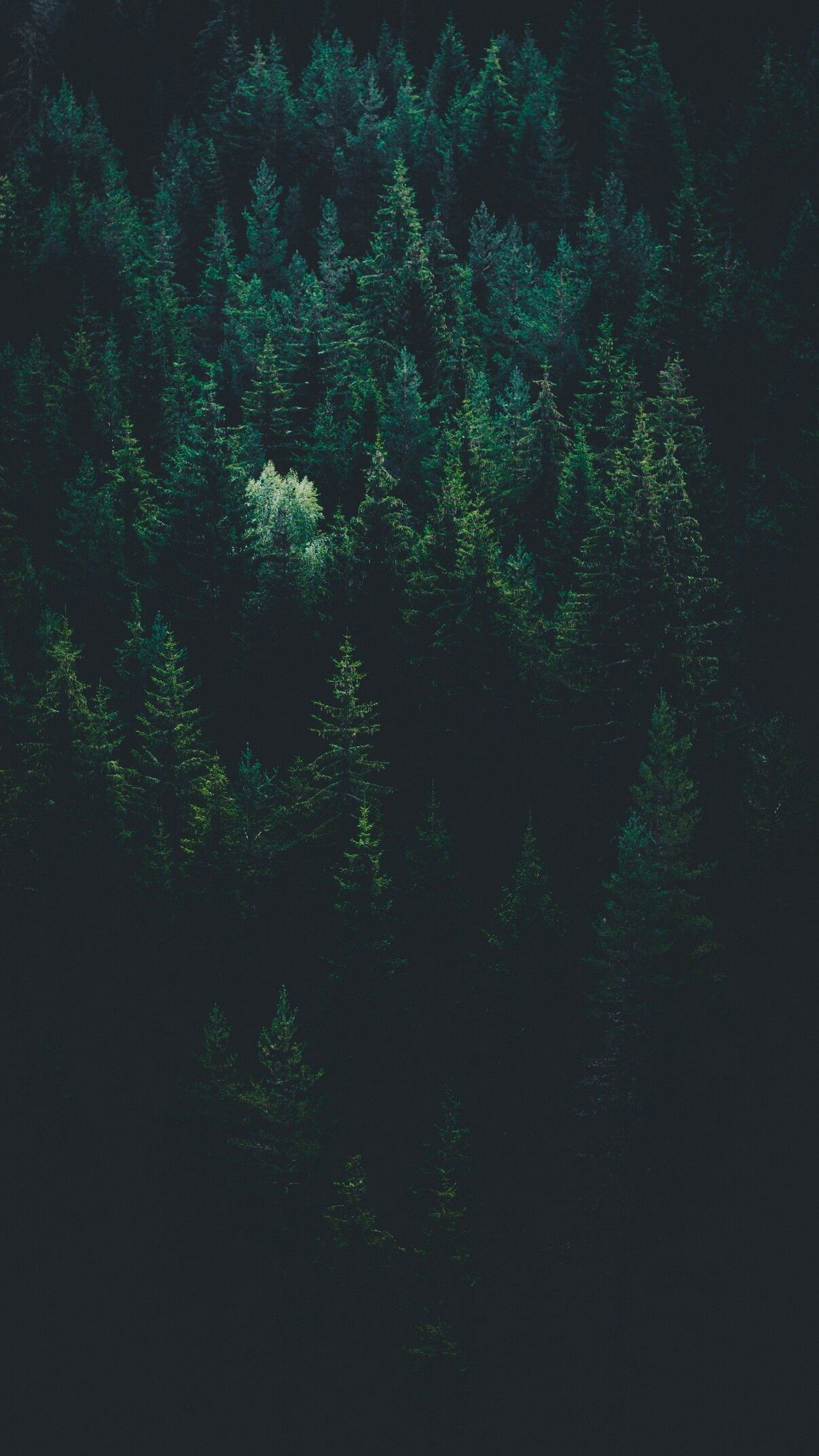 Majestic Forest Perspective Forest Wallpaper Iphone Wallpaper