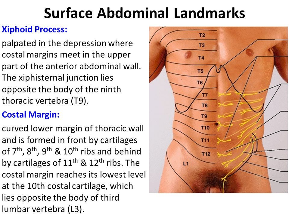 Surface abdominal landmarks anatomy pinterest acupuncture surface abdominal landmarks ccuart Images