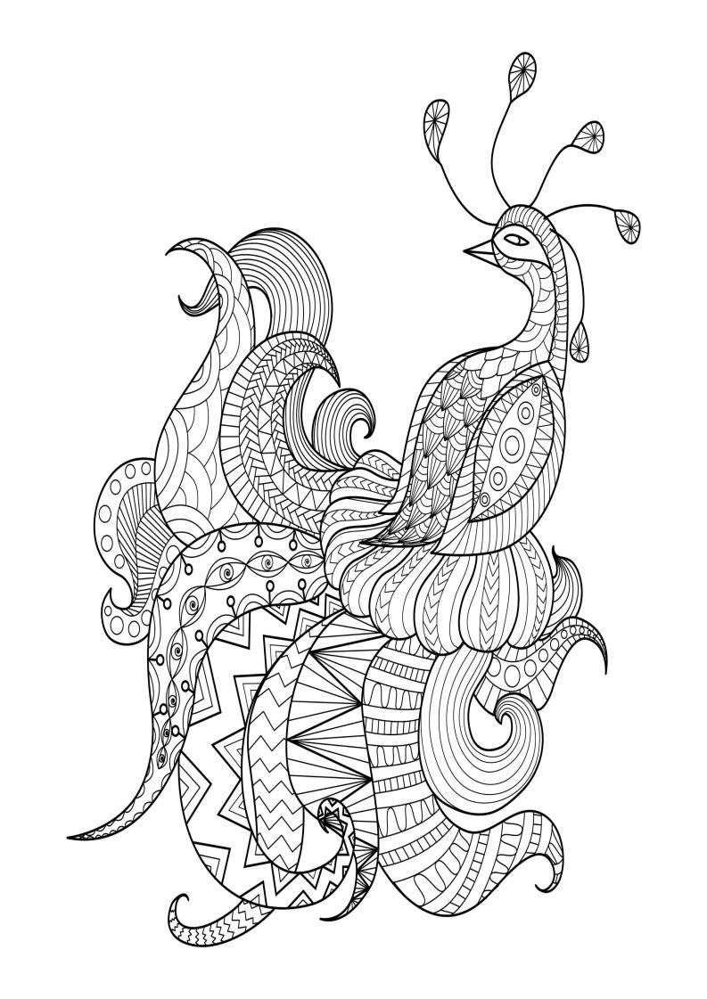 Mindfulness Coloring Page Peacock Peacock coloring