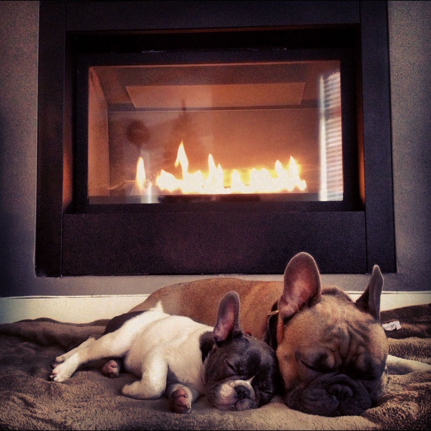 National Dog Day: Cute Dogs in front of Fireplaces - Old World ...