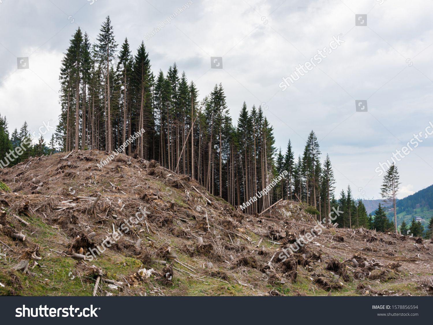 Destroyed Forest After An Avalanche Or Hurricane Natural Disaster Causing Deforestation Ad Affiliate Avalanche Hur Natural Disasters Forest Stock Photos