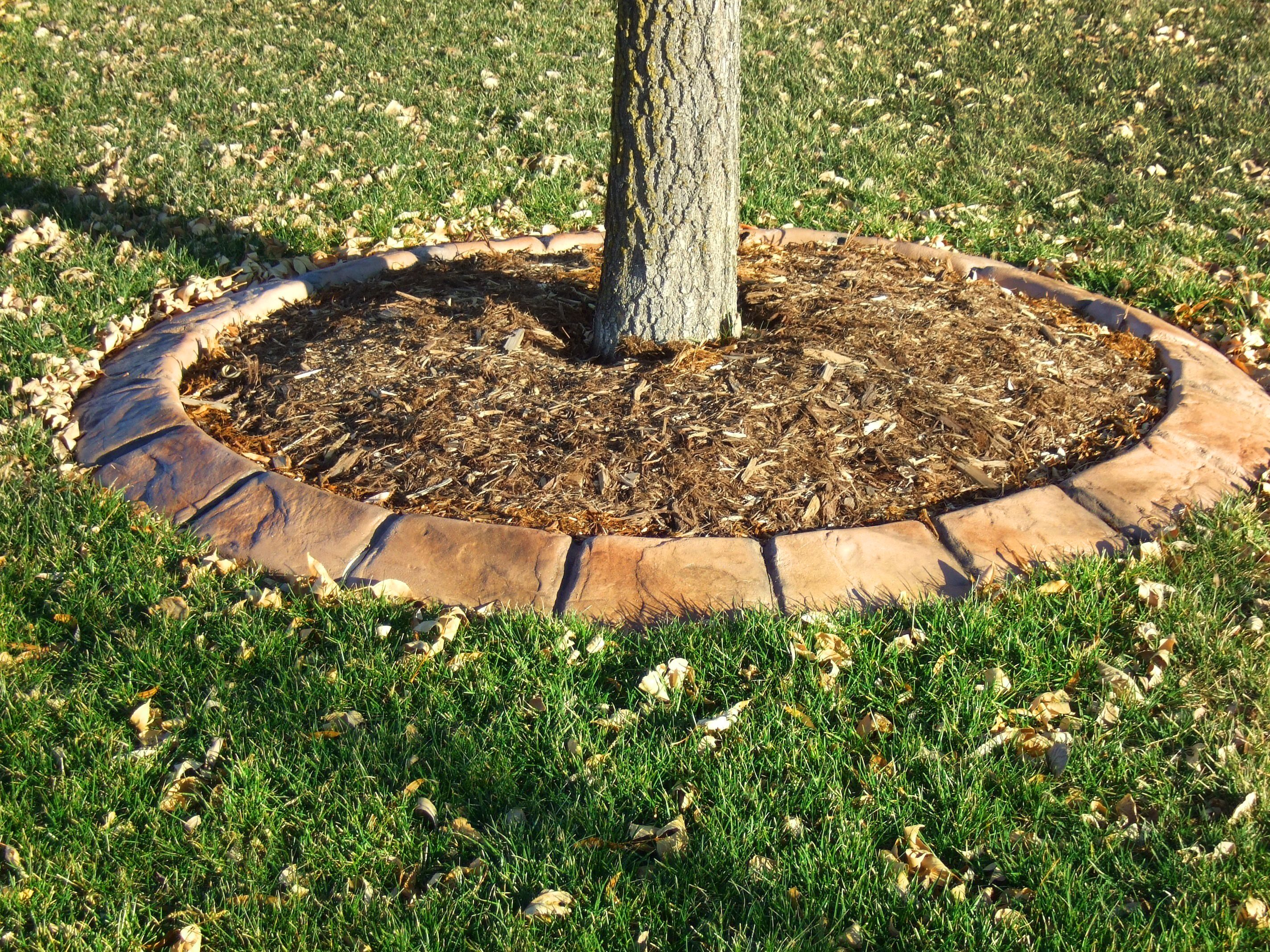 stamped concrete edging used for tree islands maintains
