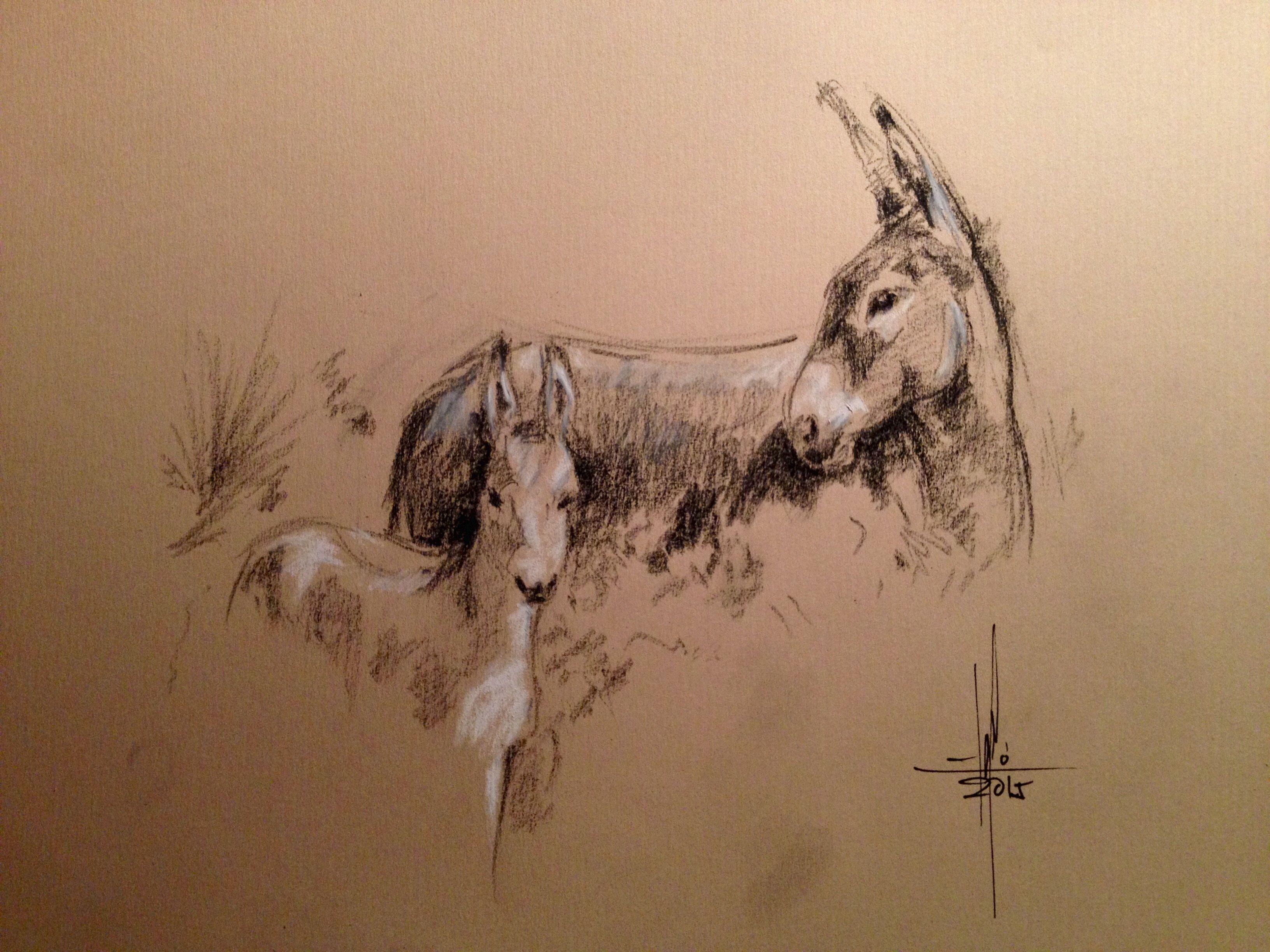 dibujo de burros a carbon sobre papel canson simil kraft dibujos dibujo de burros a carbon sobre papel canson simil kraft