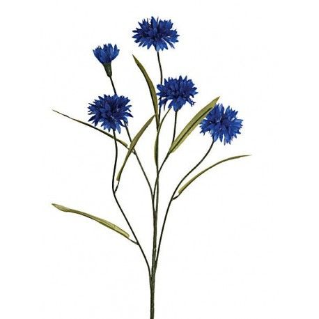 Dark Blue Cornflower Botanical Illustration Vintage Watercolor Paintings Easy Cornflower
