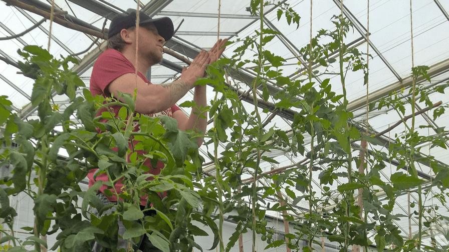 Geweldige tips voor gezondere tomaten