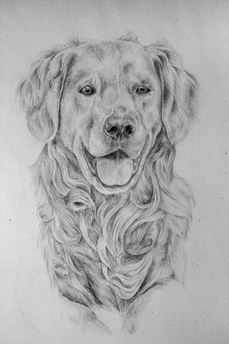 Golden retriever animals in 2018 pinterest chien dessin and chien chat - Dessin golden retriever ...