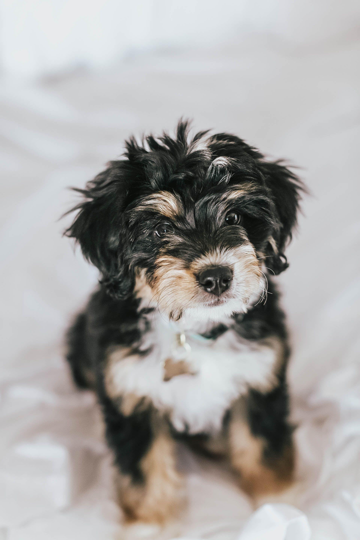 Say Hello To Jersey Blonde Bliss Mini Puppy Mini