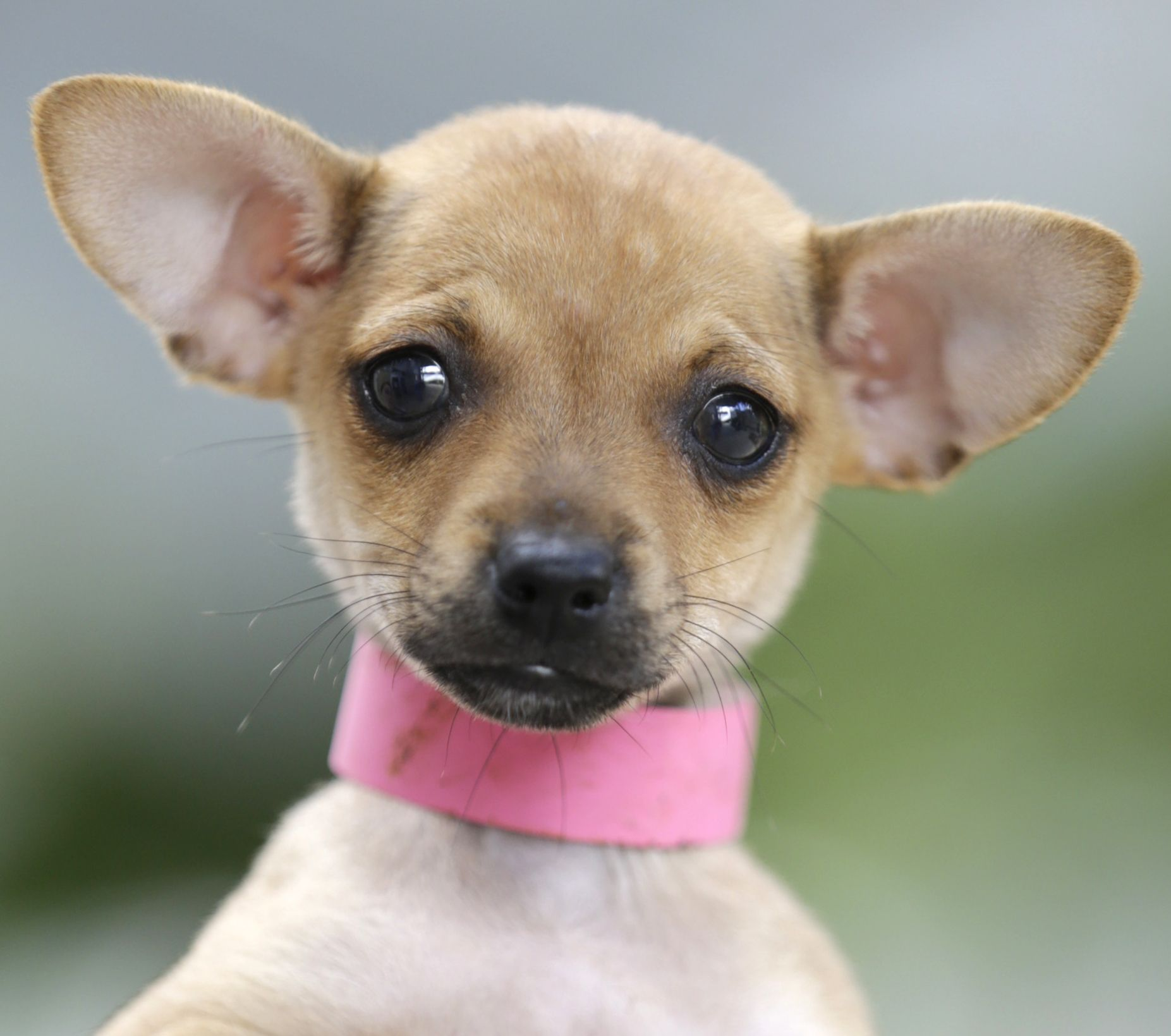 Bambi See More Dogs Cats On Www Sahumane Org Follow Us On