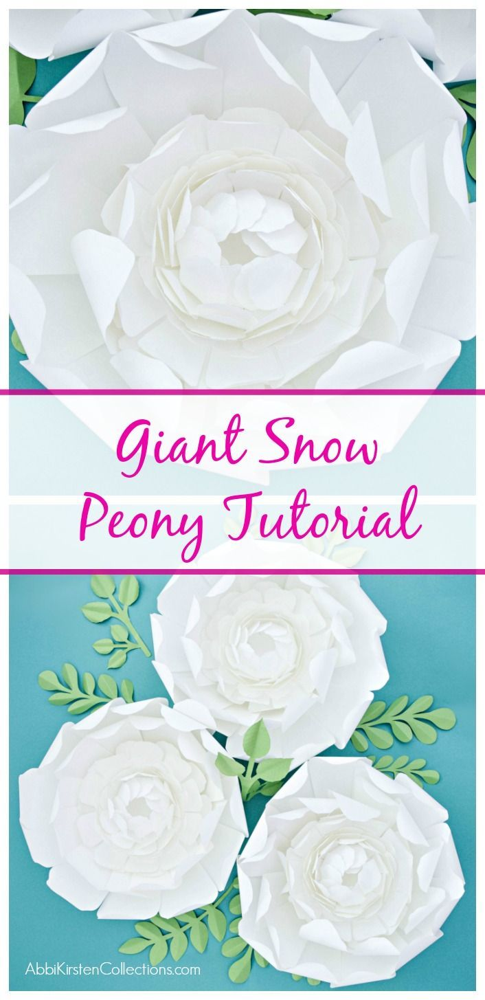 Giant Paper Snow Peony Flower Template With Vines Etsy Group