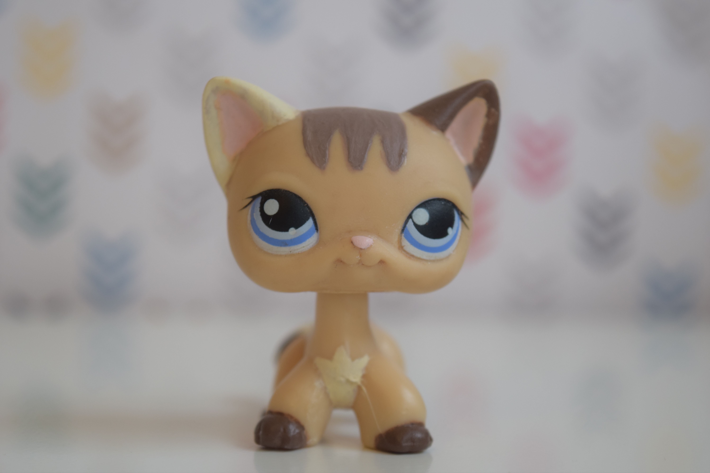 Littlest Pet Shop Beige And Brown Shorthair Cat Custom Ooak Hand