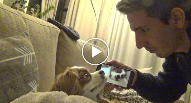 Dono Vinga-se De Cão Ao Acordá-lo Com o Som Do Seu Próprio Ressonar