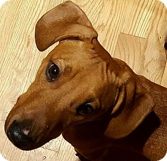 Pin By Misti Kane On Animal Adoptions Pets Pet Puppy Animals Pets