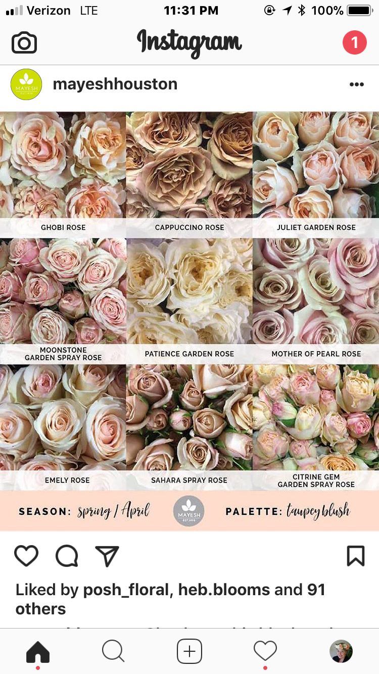 Blush And Neutral Roses Champagne Wedding Flowers Rose Varieties Blush Flowers