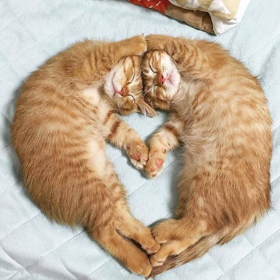 Festival Of Sleep Day 5 Cats Sleeping In Hilarious Ways Videos Cattime Kittens Cutest Cute Cats Beautiful Cats