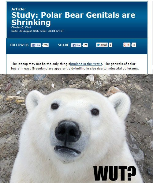 Those poor bears don't deserve such alarming news..