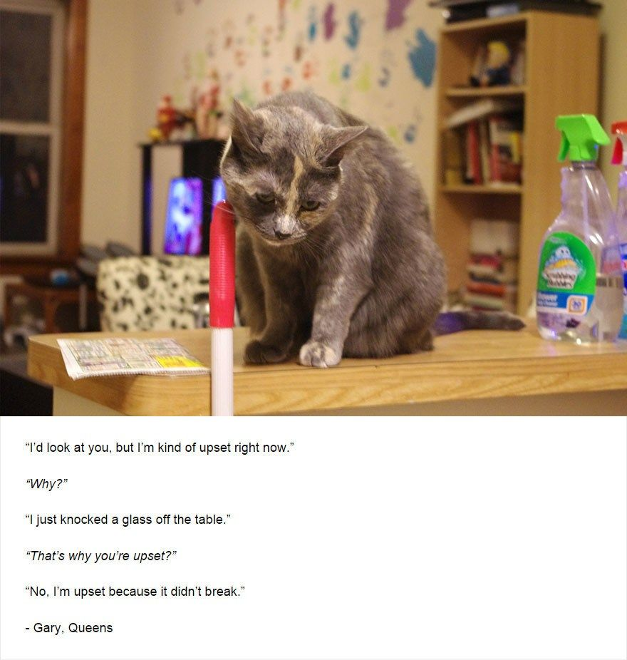 Hilarious Thoughts And Intelligent Musings From Cats Who Live In New York Funny Animals Feline What Cat